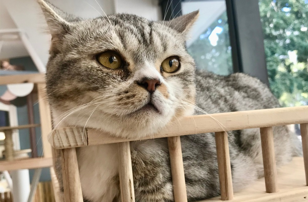 Yumiao Cat Cafe Sydney